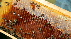 Working bees Stock Footage