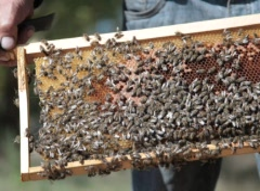 Bees inside beehive Stock Footage