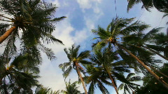 Palms  in a wind  - stock footage