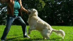 Dog play with owner Stock Footage
