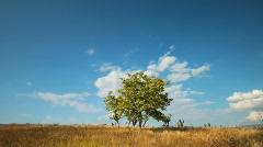 tree and clouds  - stock footage
