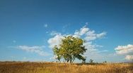 Tree and clouds  Stock Footage