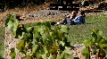 Enjoy the vineyard Footage
