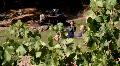 Romantic Vineyard Vineyards Footage