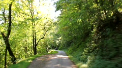 Driving down tree-lined road (HD) c - stock footage