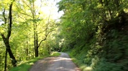 Stock Video Footage of Driving down tree-lined road (HD) c