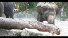 Elephant power Stock Footage