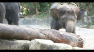 Stock Video Footage of Elephant power