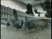 Venice Pigeons TBR Stock Footage