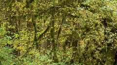 Hoh Rain Forest Stock Footage
