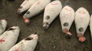 Tsukiji fish market 1 - Tokyo, Japan Stock Footage