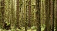 Stock Video Footage of Hoh Rain Forest