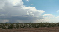 Cotton Field Rain Time Lapse Stock Footage