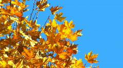 Autumn Background Stock Footage