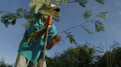 Brazil: Agroforestry Stock Footage