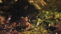 Frog jumps in slow motion - stock footage