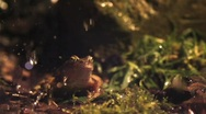 Stock Video Footage of Frog jumps in slow motion