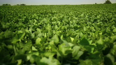Soy Farm - stock footage