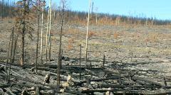 Burnt Landscape Stock Footage