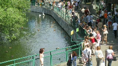 Pond in a zoo, people nearby in summer day in Moscow, Russia. Stock Footage