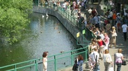 Stock Video Footage of Pond in a zoo, people nearby in summer day in Moscow, Russia.