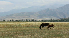 Horses 44 Stock Footage
