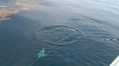 Fishing Dolphin Fish Stock Footage