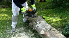 Chainsaw is cutting a large tree Stock Footage