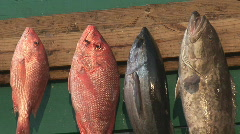 Saltwater Fishing Catch Stock Footage