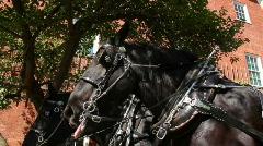 Horses on City Street Stock Footage