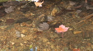 Leaf on Water Stock Footage