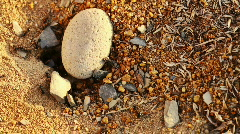 Ants colony Stock Footage