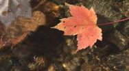 Leaf Floating Stock Footage