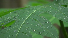 Water beads on a leaf Stock Footage