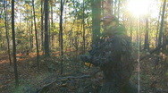 Stock Video Footage of Whitetail Deer Bowhunter