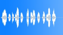 Sheep - sound effect