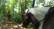 Stock Video Footage of Horse Riding in the Woods