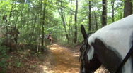 Stock Video Footage of Horse POV in woods