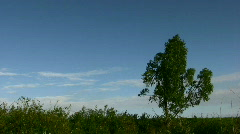 tree against the blue sky - stock footage