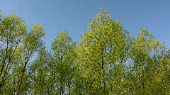 trees against the blue sky - stock footage
