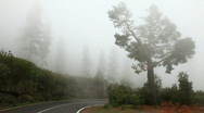 Fog on the road Stock Footage