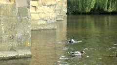 Ducks on River Wye at Bakewell Bridge Stock Footage