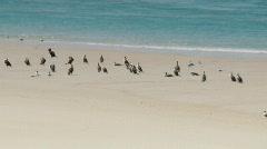 Flock of Sea Birds Resting On Sand Bar, Sandbank Stock Footage