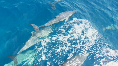 Group of Common Dolphins Overhead View - Slow Motion Stock Footage
