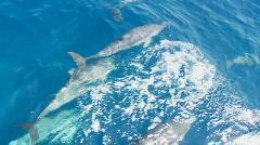 Ryhmä Delfiinit Overhead View - Slow Motion Arkistovideo