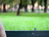 Man in the park thinking, dolly shot Stock Footage