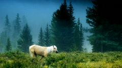 White horse slow mo 1 - stock footage