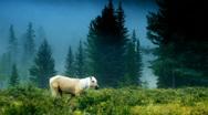 White horse slow mo 1 Stock Footage