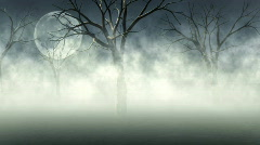 Woods in Fog Stock Footage