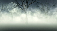Woods in Fog Stock Footage